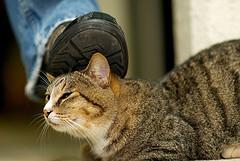Stray Cat Jazz