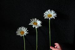 JJ  Lending a Hand With The Three Daisy Photoshoot! LOL