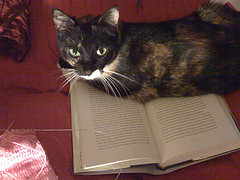 Josie is happiest when sitting on the book I'm trying to read.