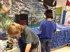Insect Exhibit in the Barrett Discovery Lab